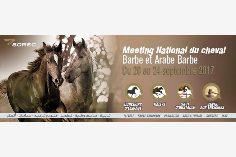 meeting national du cheval barbe et arabe barbe eljadida bouge